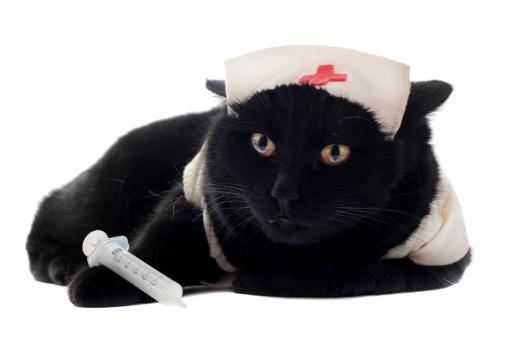 Black Cat Natural Foods