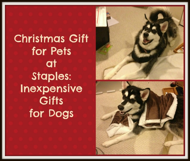 Christmas Gift for Pets at Staples: Inexpensive Gifts for Dogs
