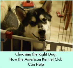 AKC Dog