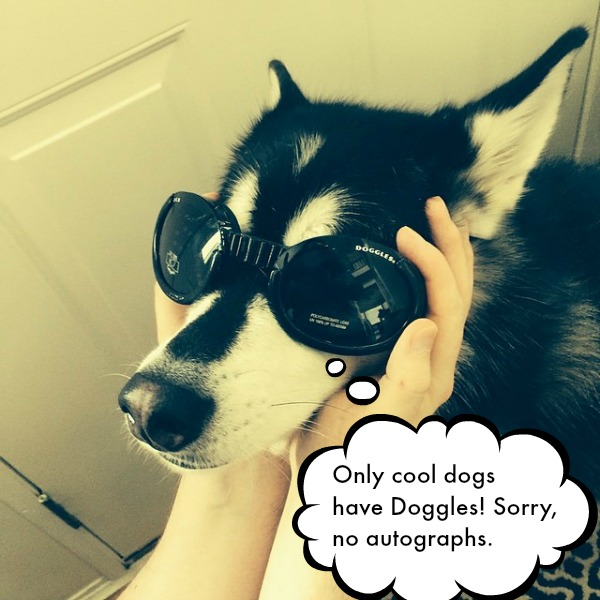 Doggles Cool Dog
