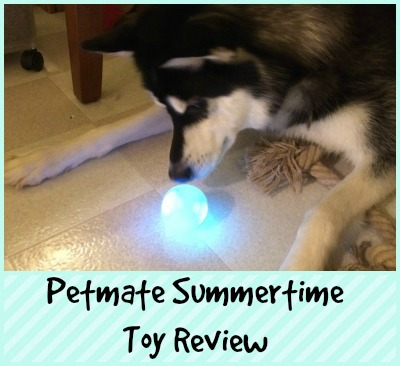 Petmate Summertime Toy Review