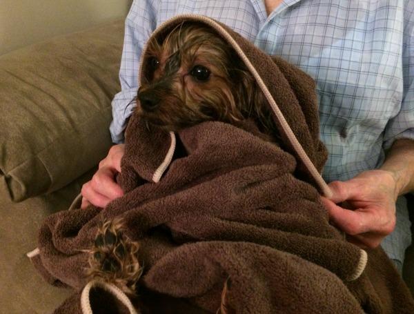 Molly Ecloth towel