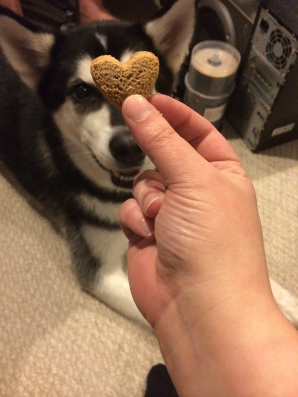 love with dog