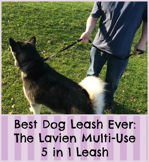 Best Dog Leash Ever The Lavien Multi-Use 5 in 1 Leash