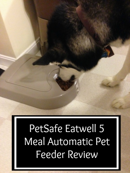 PetSafe Eatwell 5 Meal Automatic Pet Feeder Review