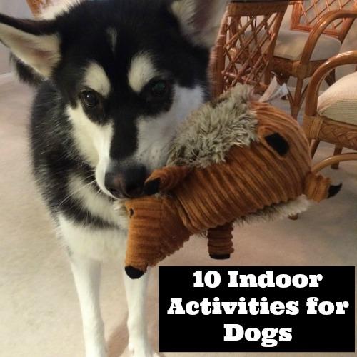 10 Indoor Activities for Dogs