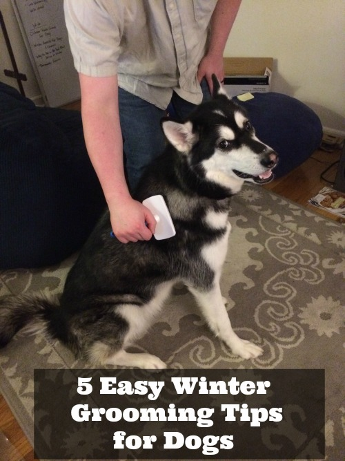 5 Easy Winter Grooming Tips for Dogs
