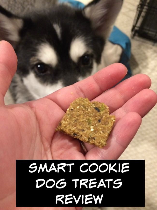 Smart Cookie Dog Treats 3