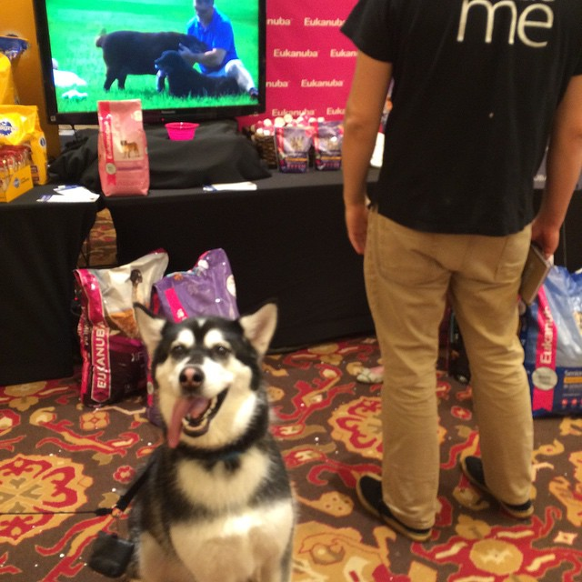 Eukenuba Mars Petcare BlogPaws