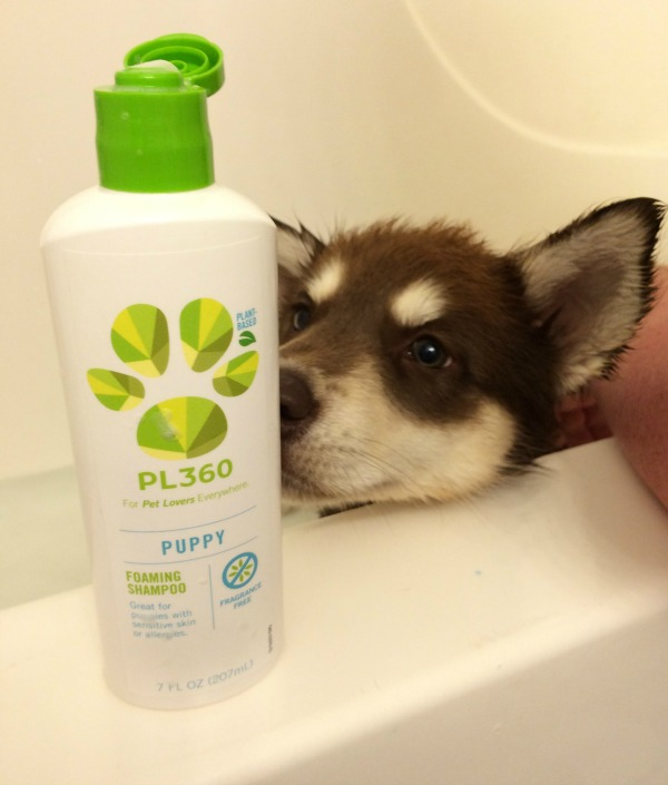 Looking for gentle, all natural puppy shampoo? See what we think of PL360 Puppy Foaming Shampoo here!