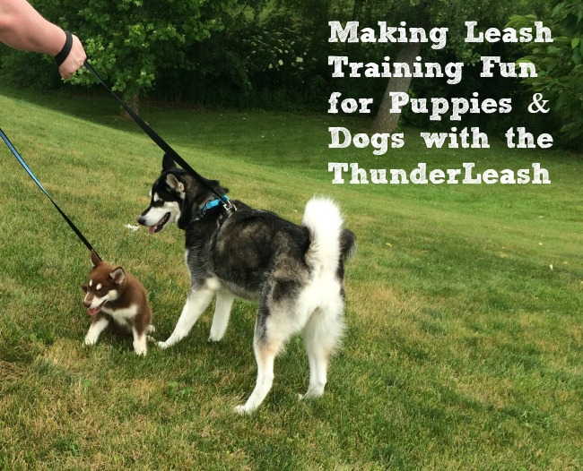 Making Leash Training Fun for Puppies & Dogs with the ThunderLeash