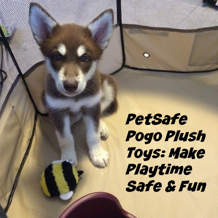 PetSafe Pogo Plush Toys Make Playtime Safe & Fun