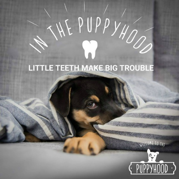 Puppyhood-In-the-Puppyhood