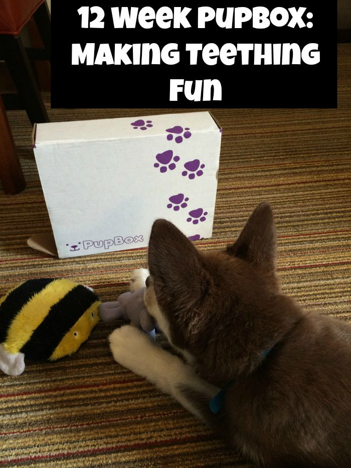 Looking for some wonderful toys for your puppy, especially during teething? See why we are fans of the Pupbox here!