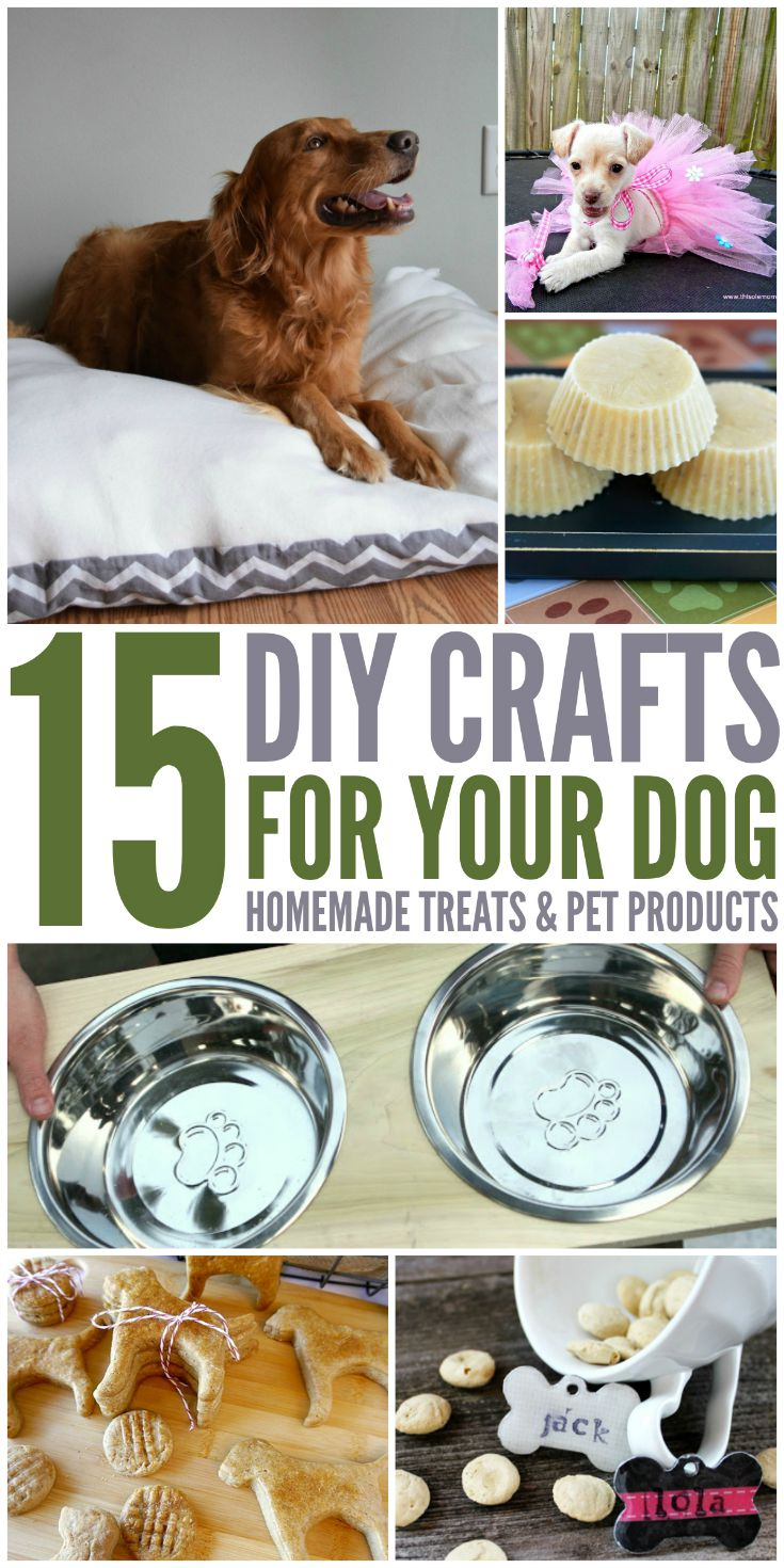 15 DIY Crafts For Your Dog