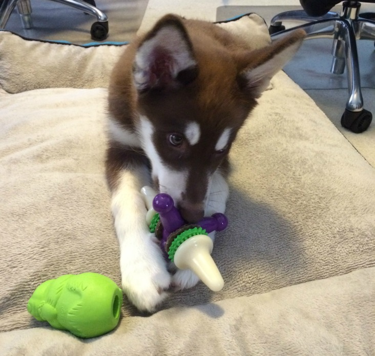 Looking for awesome toys to help your puppy survive the teething stage? See what we think of PetSafe's selection of Puppy Toys here!