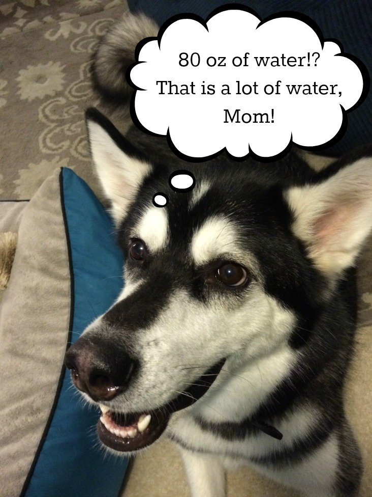 Did you know that dehydration is a serious issue with dogs & cats? Learn how you can keep your pets hydrated & happy here!