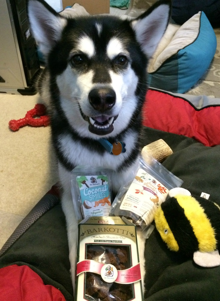 Looking for yummy natural treats for your favorite pup? See what we think of Dr Harvey's Coconut Smiles, Sweet Potate'r, Chews & Organic Barkotti treats here!