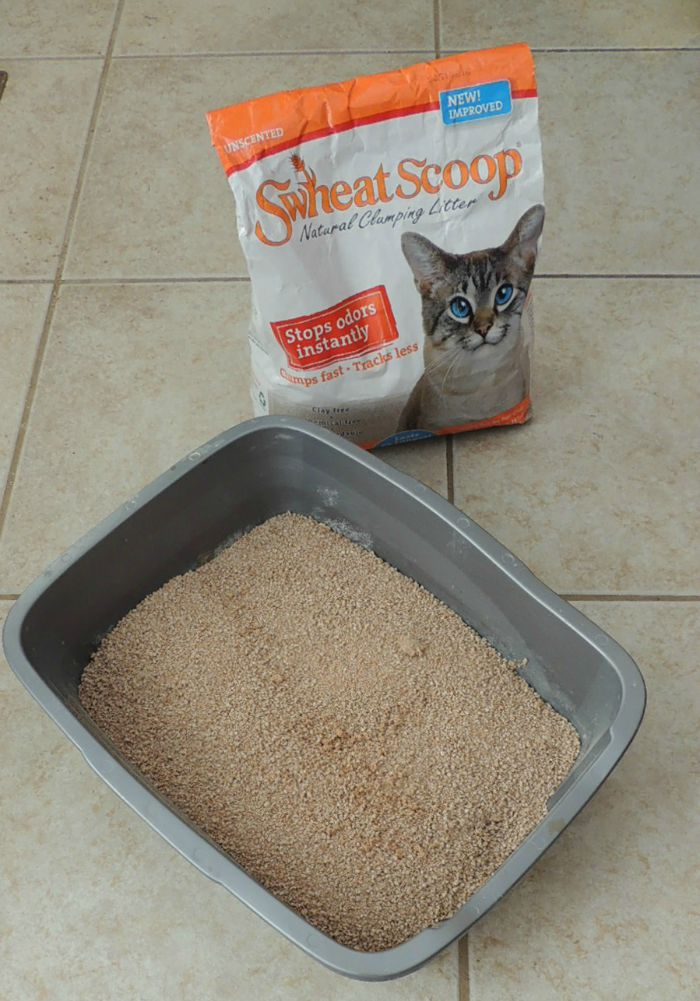 Looking for a clay-free kitty litter that is not only clumps but is good for the environment? See what we think of sWheat Scoop Kitty Litter here!
