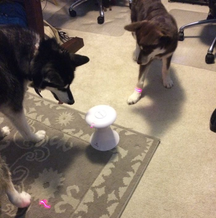 Looking for an adorable toy to keep dogs and cats entertained & moving? See what we think of the Frolicat Dart Duo Laser Toy here!