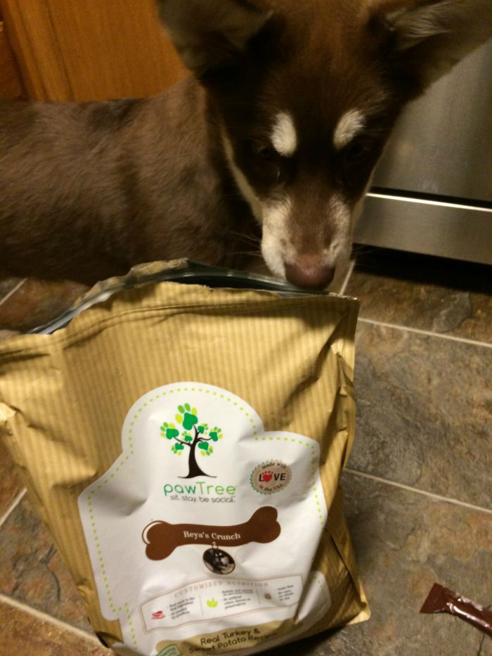 Looking for a nutritious food for your favorite dog without fillers and with meat as the first ingredient? See what we think of pawTree dog food here!