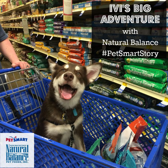 Want to see what Ivi does on her first big adventure without Reya? See why Ivi is so excited to be visiting PetSmart for the Natural Balance launch celebration here! #PetSmartStory