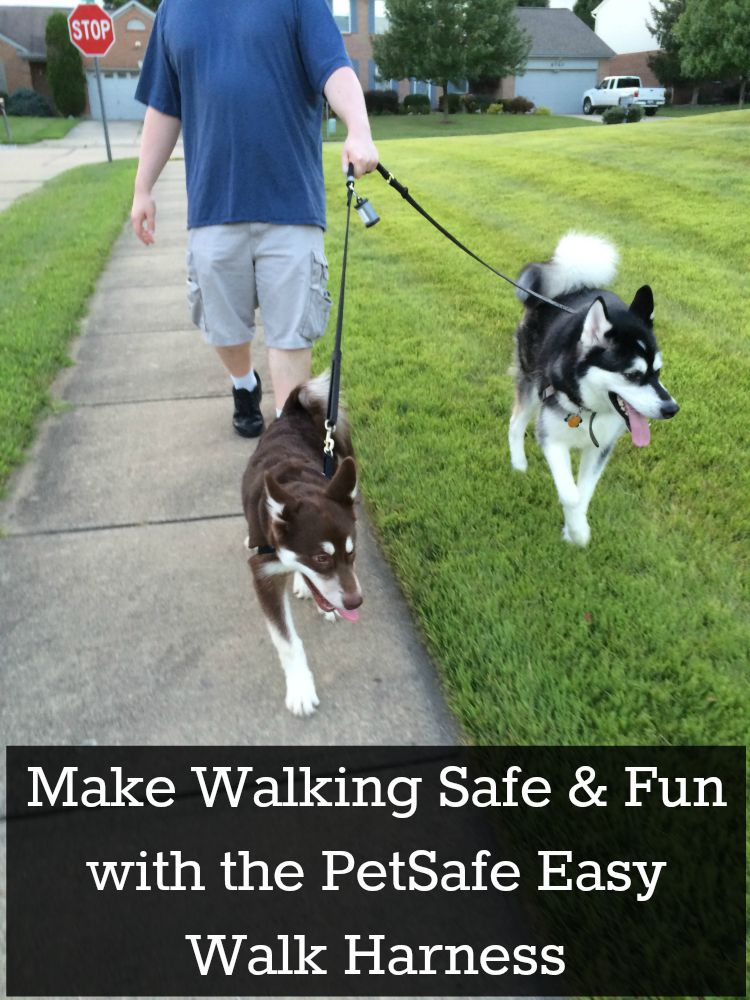 Looking for a harness that is not only comfortable for dogs but discourages them from pulling? See what we think of the PetSafe Easy Walk Harness here!