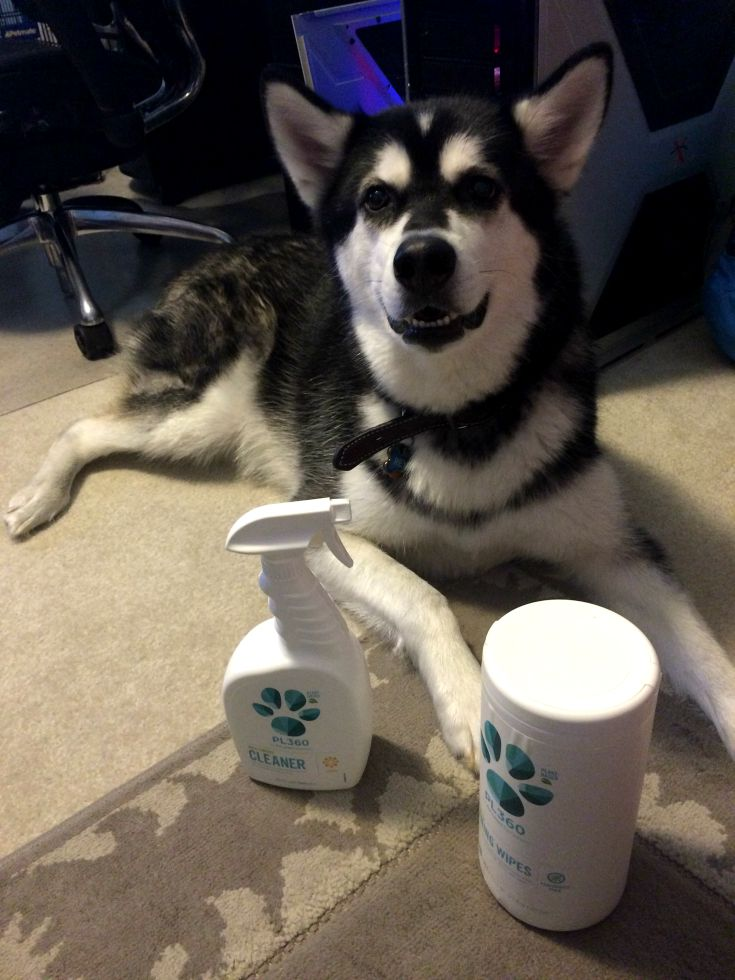 Looking for some awesome, plant based cleaners for your home that are also pet friend? See what we think of PL360's line of household cleaners here!