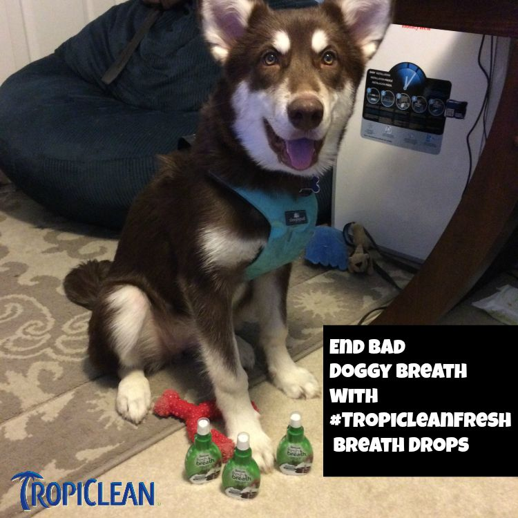 Tired of cuddle time being cut short due to bad dog breath? Learn how you can put an end to smelly breath & improve your dogs overall oral health here! #TropiCleanFresh