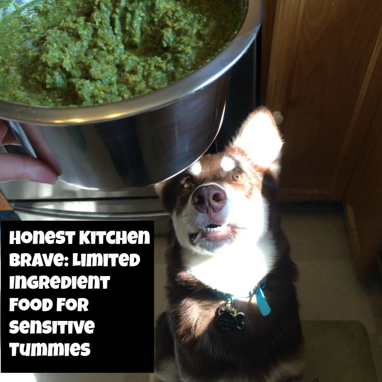 Looking for an amazing food for dogs with allergies or sensitive tummies? See why we love Honest Kitchen's new limited ingredient line here!