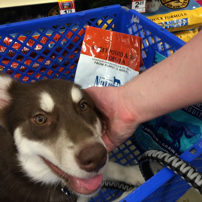 Looking for food and treats to make managing dog allergies easier? See what we think of PetSmart's selection of Natural Balance food & treats here! #PetSmartStory