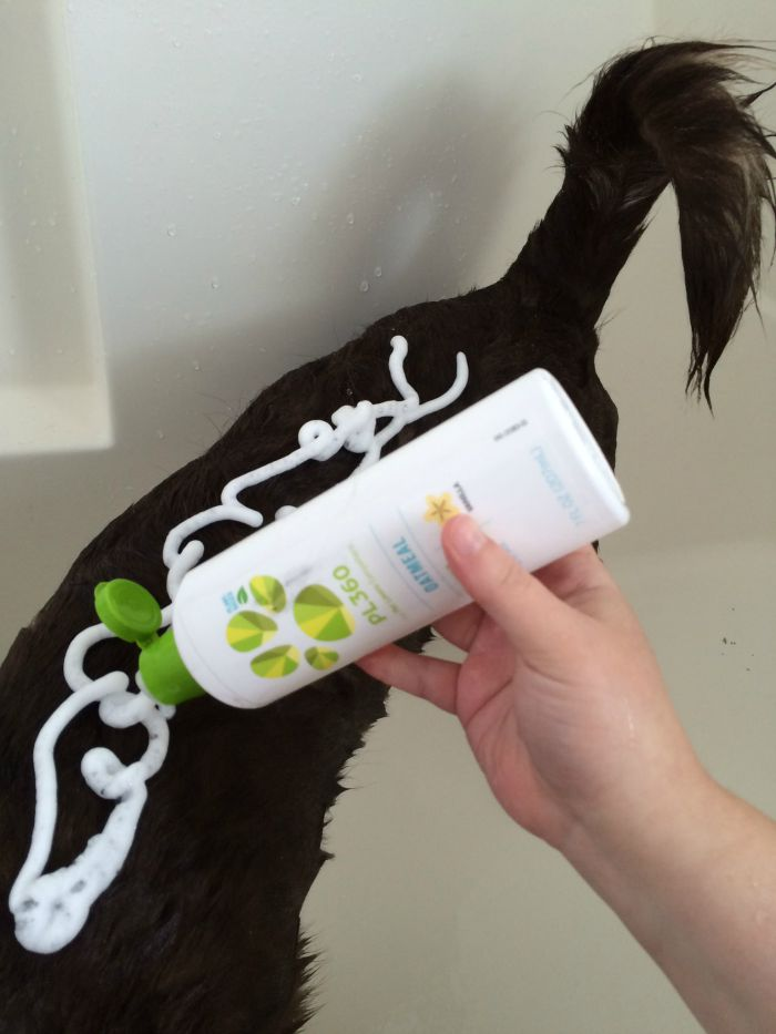 Want to make bath time a fun, natural experience for your dog? See what we think of PL360's line of plant based grooming products for dogs here!