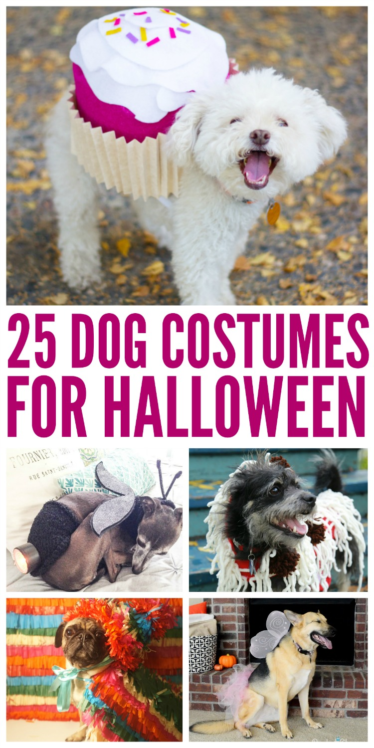Looking for cute costumes for your dog this Halloween? Check out these 25 dog costumes for Halloween here!