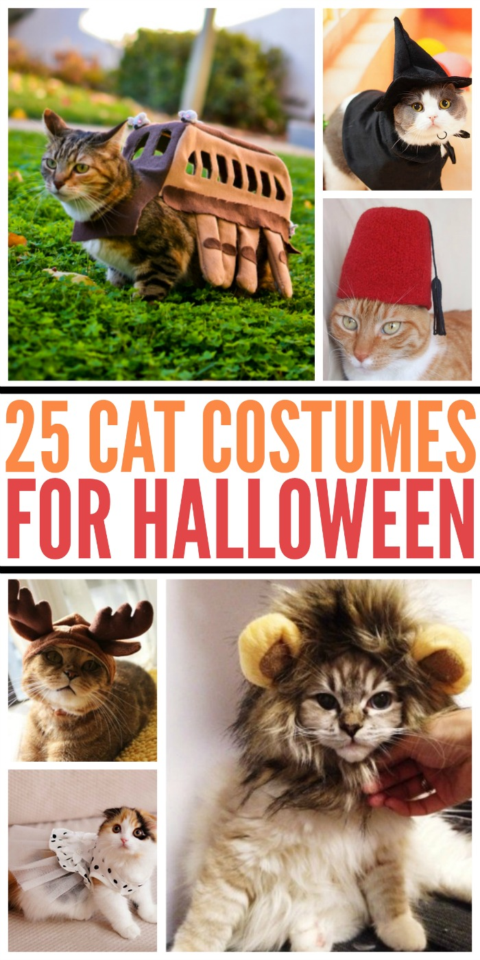 Want to make your cat look cute this Halloween? Check out our list of 25 Amazing Halloween Costumes for Cats here!