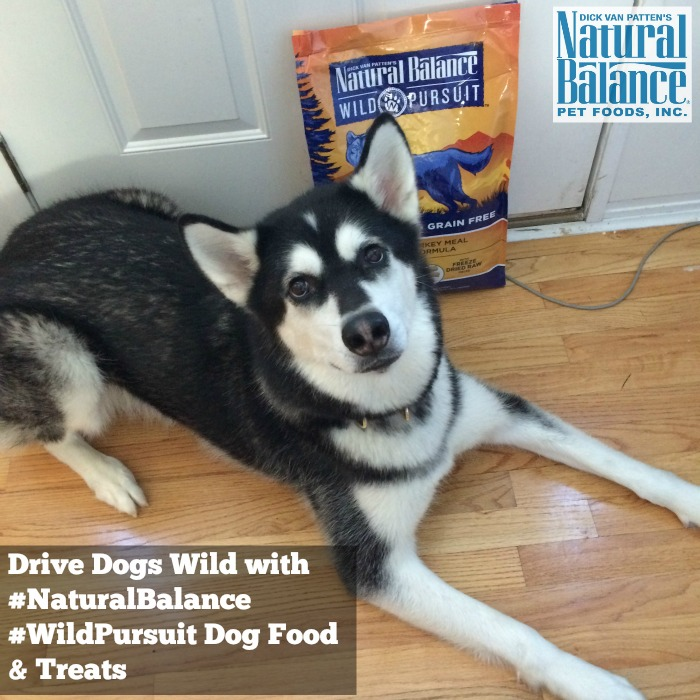 Looking for high protein dog food made from quality ingredients? See what we think of Natural Balance Wild Pursuit Dog Food here!