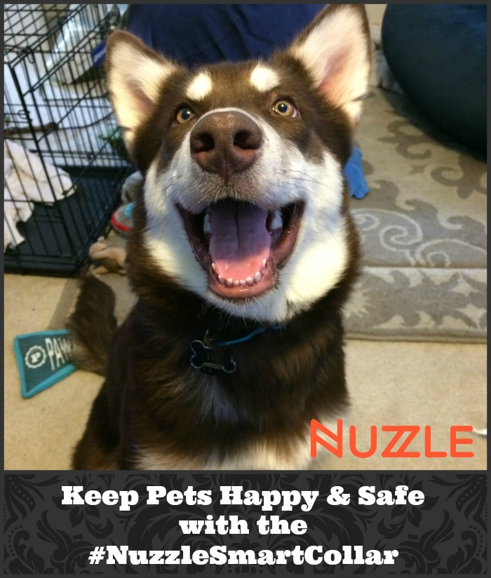Looking for a GPS dog collar that can track your dogs location without monthly fees? See what we think of the Nuzzle Collar & learn how you can get one here! #NuzzleSmartCollar