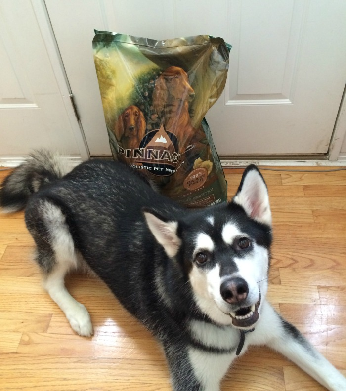 Looking for a grain free dog food made from high quality ingredients? See what Reya thinks of Pinnacle Dog Food here! #PinnacleHealthyPets