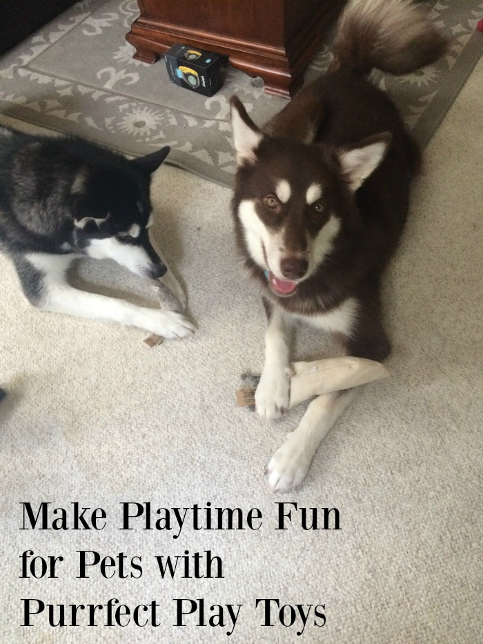 Looking for some awesome toys for your favorite dog and cat? See what we think of Purrfect Play Toys hemp pet toys here!
