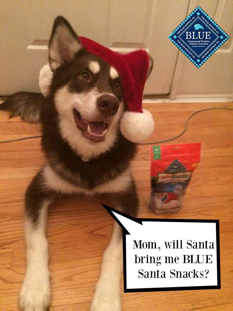 Want to make the holiday season even better for dogs? Give them a fun stocking stuff this holiday season with Blue Buffalo #BLUESantaSnacks!