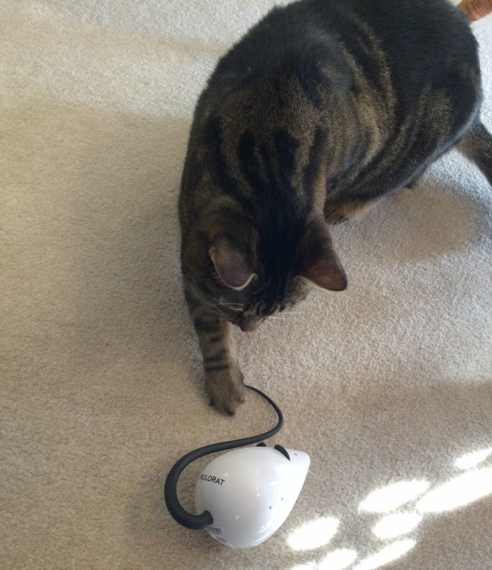 Looking for a fun, inexpensive toy to get your cats moving? See what we think of the Frolicat RoloRat Cat Toy here!