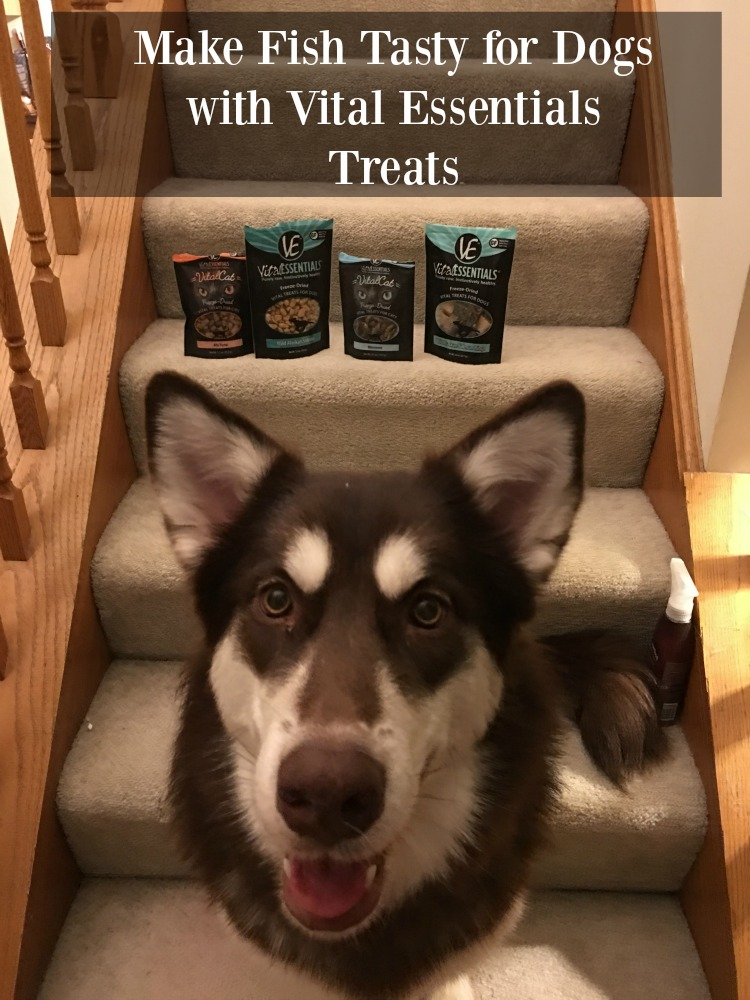 Looking for some awesome, all natural dog treats? See what we think of Vital Essentials line of fish treats here!