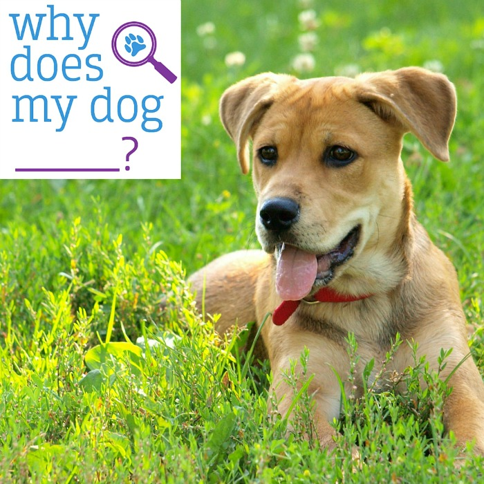 Need help with training your dog & helping build a better relationship between you & your dog? See what we think of Why Does My Dog? here!
