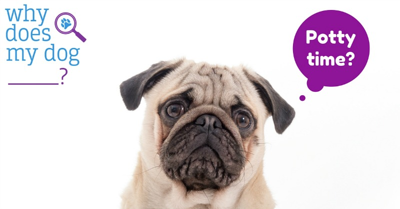 Dealing with puppy accidents that are constantly happening in front of you? Check out Aly from Why Does My Dog's advice on dealing with these accidents here!