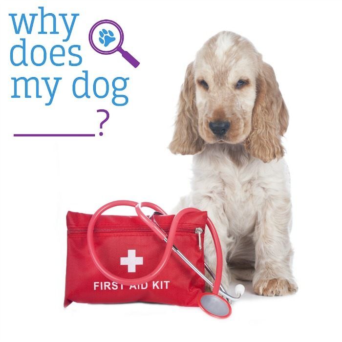 Do you know what to do in an emergency? Check out these helpful first aid tips from Aly at WhyDoesMyDog.com here!
