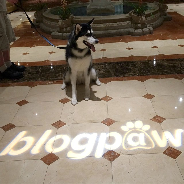 BlogPaws INtro