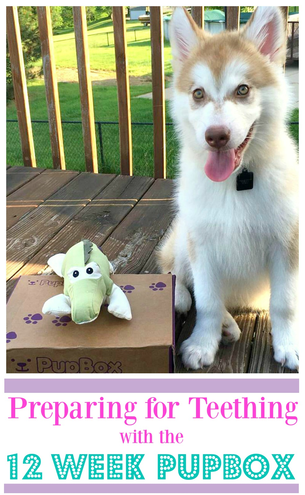 Looking for some wonderful toys for your teething puppy? See what we think of the 12 week Pupbox here!