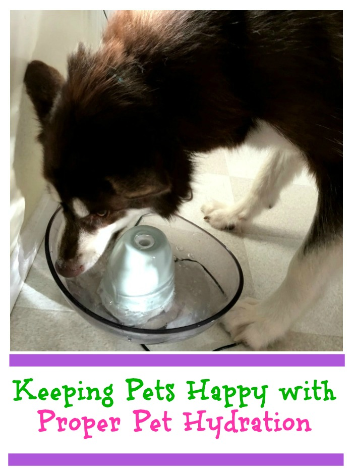 Did you know that dehydration is a serious problem for dogs & cats during the summer? See why dog hydration is important & how you can help here!