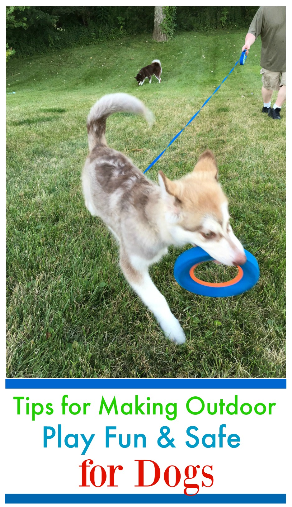 Yard Toys For Dogs : Tips for making outdoor play fun safe dogs budget