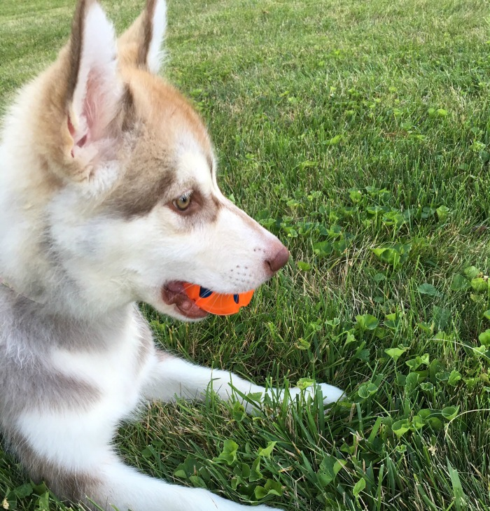 Rylie with Ball Toy