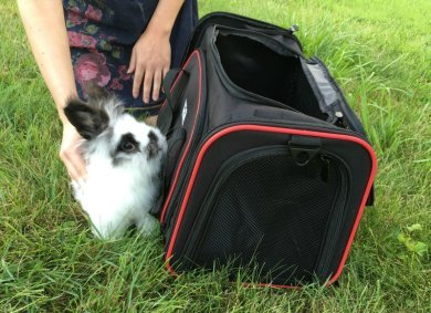 Looking for a carrier that is great for small dogs & small pets? See what we think of the OKBUYNOW Extendable Soft-Sided Travel Pet Carrier here!